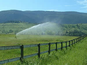 Irrigation of Coldstream farmland